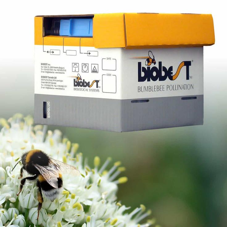 Ruche de Bourdons pollinisateurs